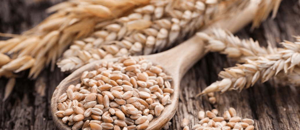 Eliminating Wheat And Grains For Better Health